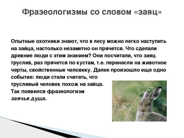 Опытные охотники знают, что в лесу можно легко наступить на зайца, настолько...