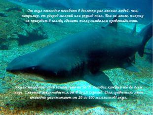 От акул ежегодно погибает в десятки раз меньше людей, чем, например, от удар