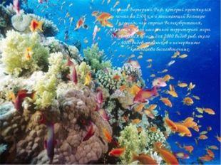 Большой Барьерный Риф, который протянулся почти на 2500 км и занимающий боль