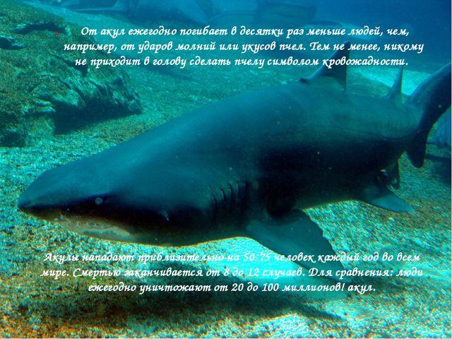 От акул ежегодно погибает в десятки раз меньше людей, чем, например, от удар...