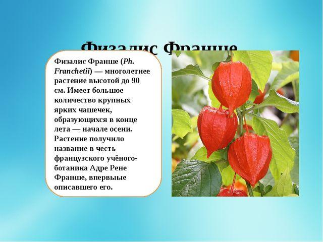 Физалис Франше Физалис Франше(Ph. Franchetii)— многолетнее растение высото...