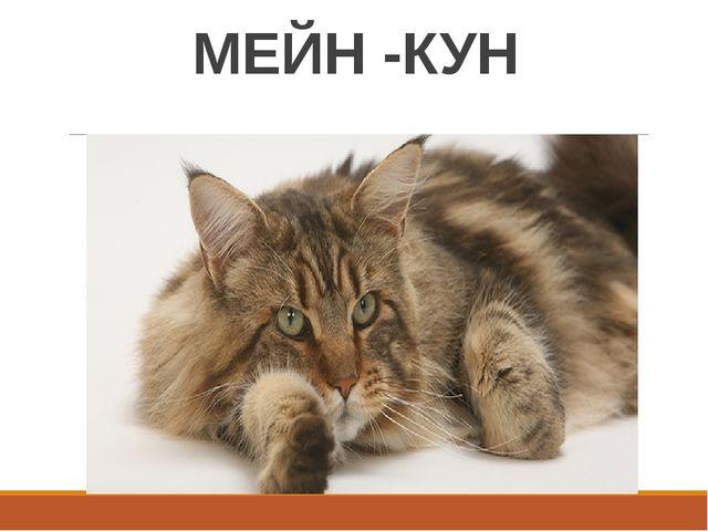 МЕЙН -КУН
