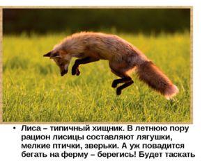 Лиса – типичный хищник. В летнюю пору рацион лисицы составляют лягушки, мелки