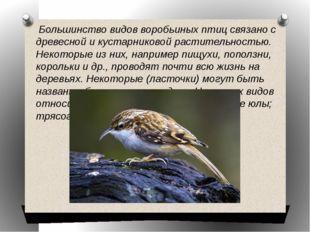 Большинство видов воробьиных птиц связано с древесной и кустарниковой растит