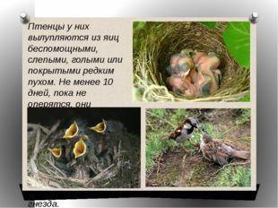 Птенцы у них вылупляются из яиц беспомощными, слепыми, голыми или покрытыми р