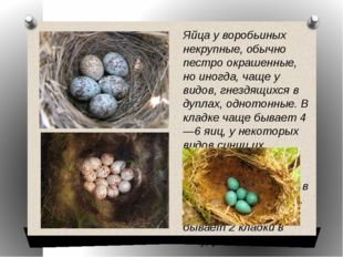 Яйца у воробьиных некрупные, обычно пестро окрашенные, но иногда, чаще у видо