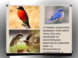 К отряду относится примерно 5100 видов птиц. Все они, несмотря на значительн