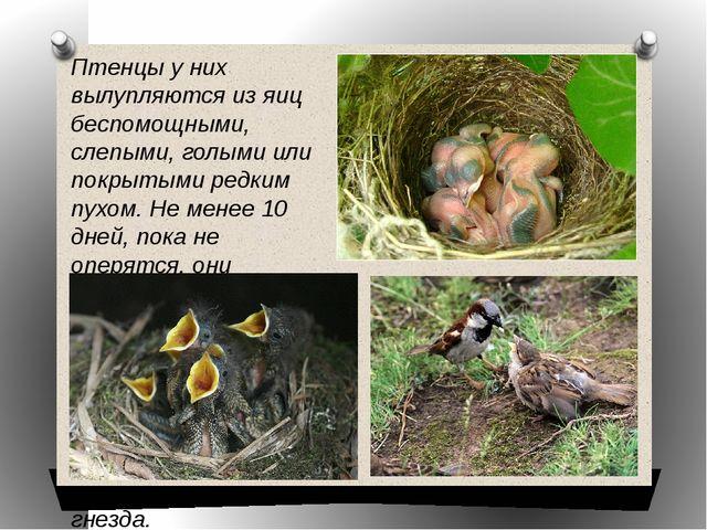Птенцы у них вылупляются из яиц беспомощными, слепыми, голыми или покрытыми р...