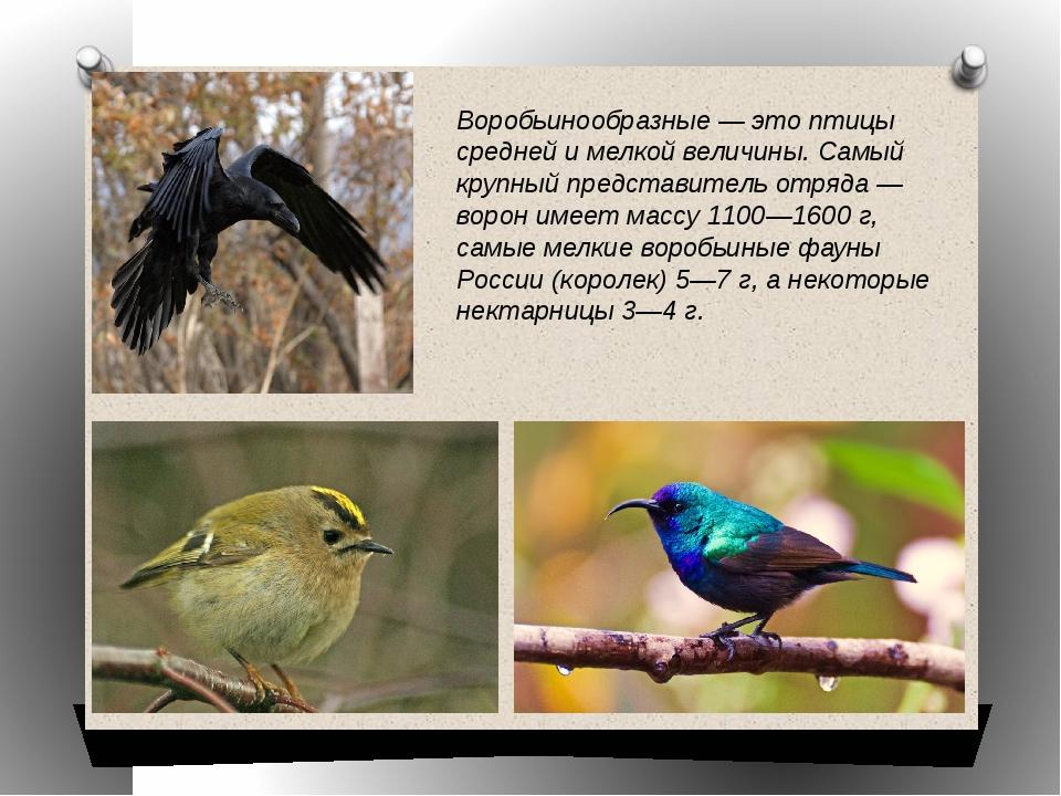Воробьинообразные — это птицы средней и мелкой величины. Самый крупный предст...