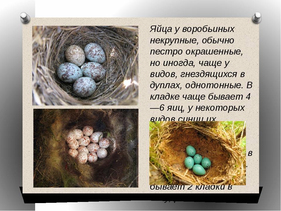Яйца у воробьиных некрупные, обычно пестро окрашенные, но иногда, чаще у видо...