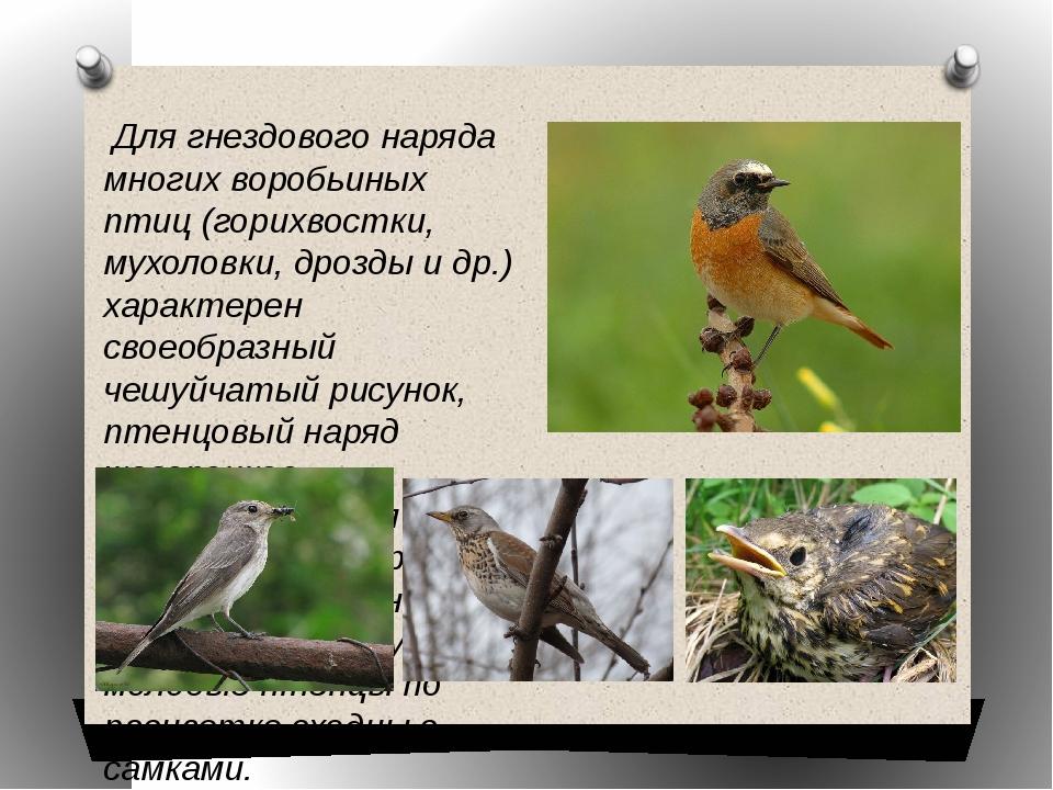 Для гнездового наряда многих воробьиных птиц (горихвостки, мухоловки, дрозды...