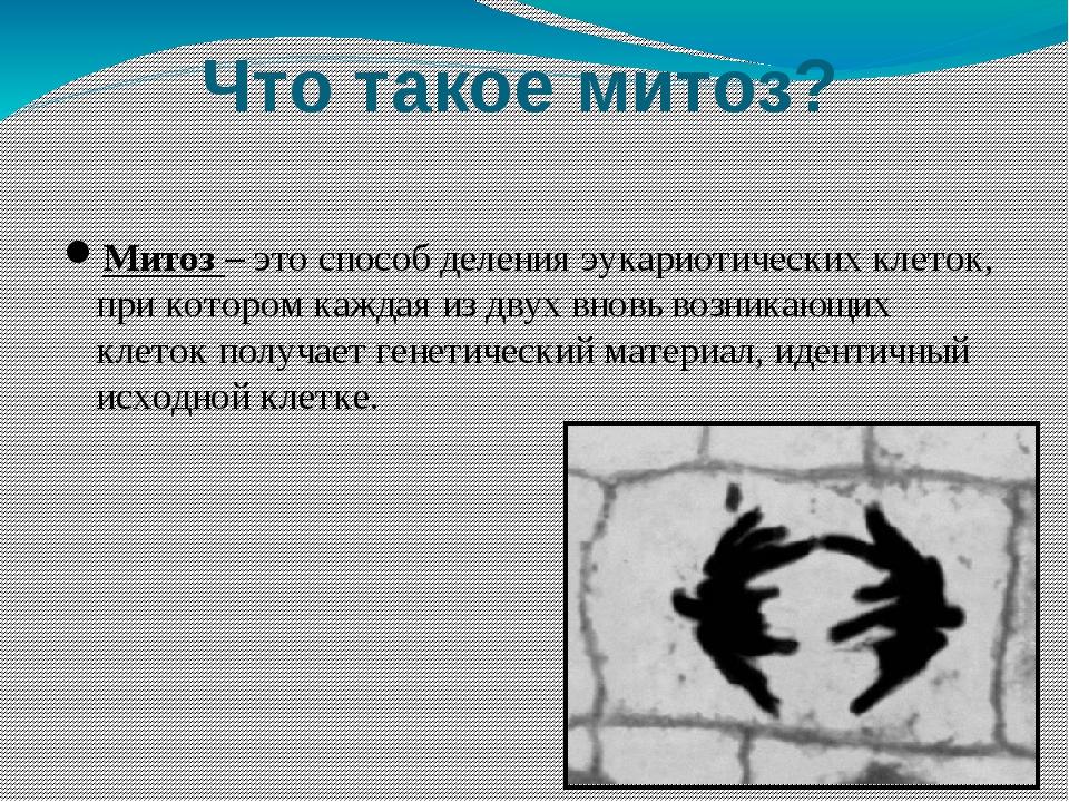Что такое митоз? Митоз – это способ деления эукариотических клеток, при котор...