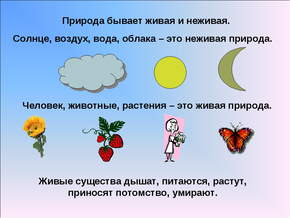 Природа бывает живая и неживая. Солнце, воздух, вода, облака – это неживая пр...