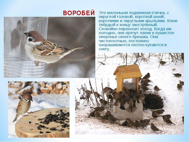 ВОРОБЕЙ Это маленькая подвижная птичка, с округлой головой, короткой шеей, ко...