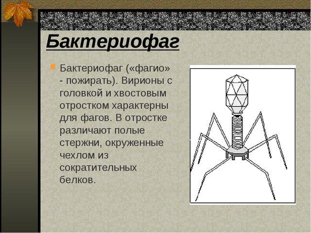 Бактериофаг Бактериофаг («фагио» - пожирать). Вирионы с головкой и хвостовым...