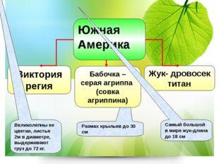 Жук- дровосек титан Виктория регия Великолепны ее цветки, листья 2м в диаметр