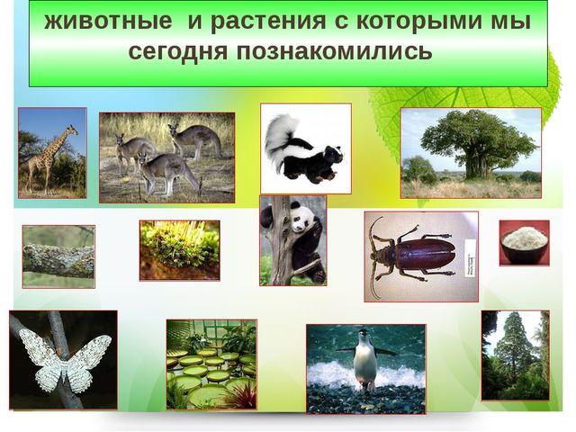 животные и растения с которыми мы сегодня познакомились
