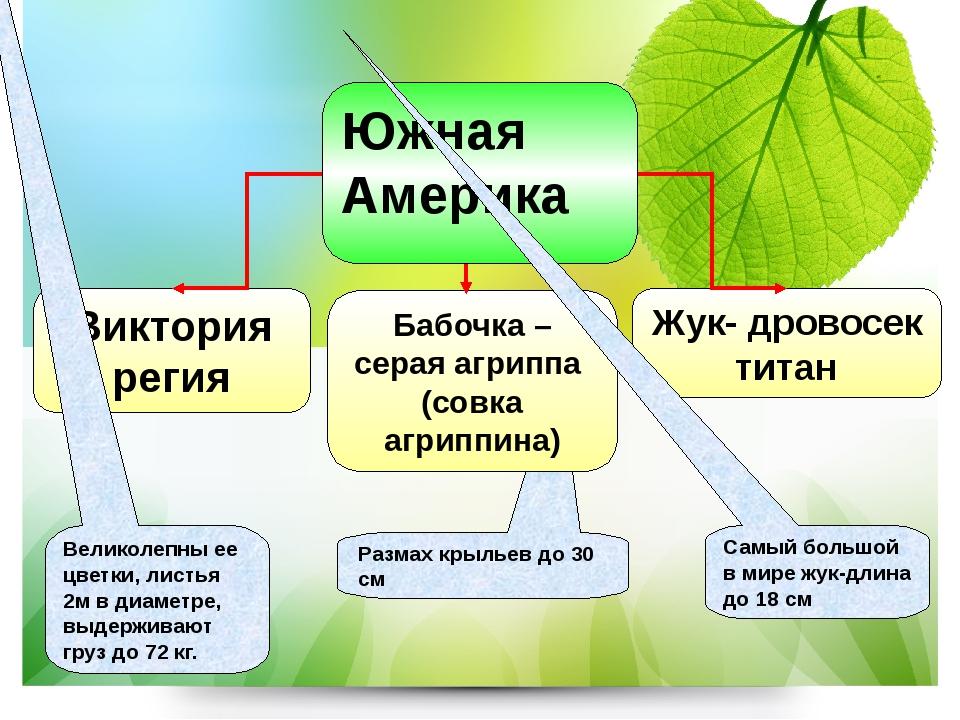 Жук- дровосек титан Виктория регия Великолепны ее цветки, листья 2м в диаметр...