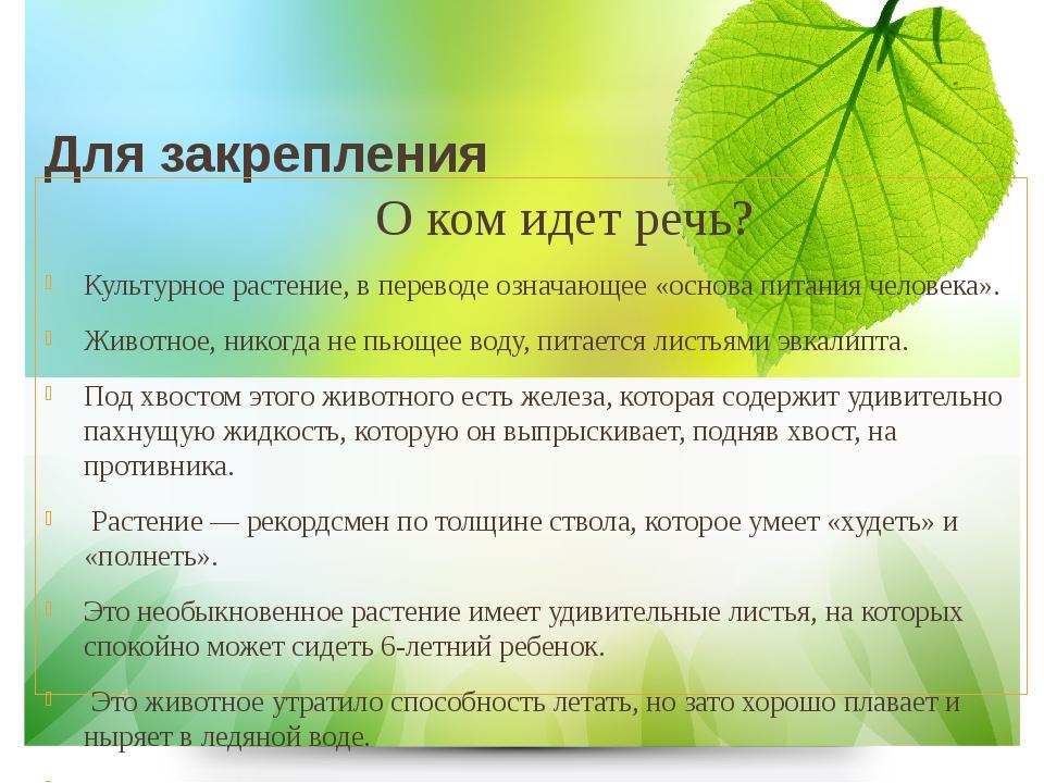 Для закрепления О ком идет речь? Культурное растение, в переводе означающее...