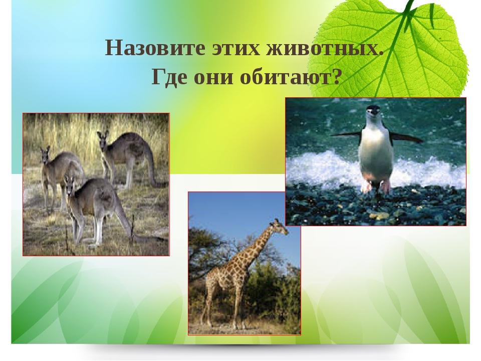 Назовите этих животных. Где они обитают?