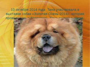 10 октября 2014 года Тина участвовала в выставке собак «Золотая Осень-2014»,