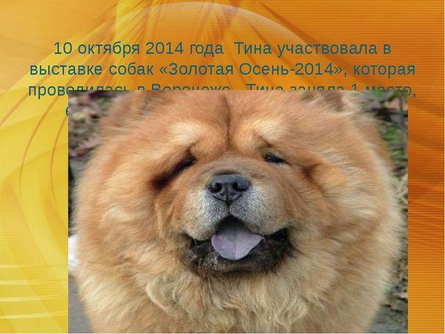 10 октября 2014 года Тина участвовала в выставке собак «Золотая Осень-2014»,...