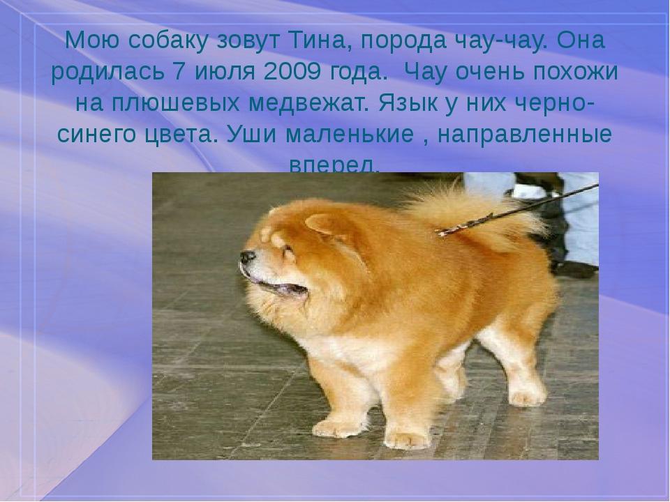Мою собаку зовут Тина, порода чау-чау. Она родилась 7 июля 2009 года. Чау оче...