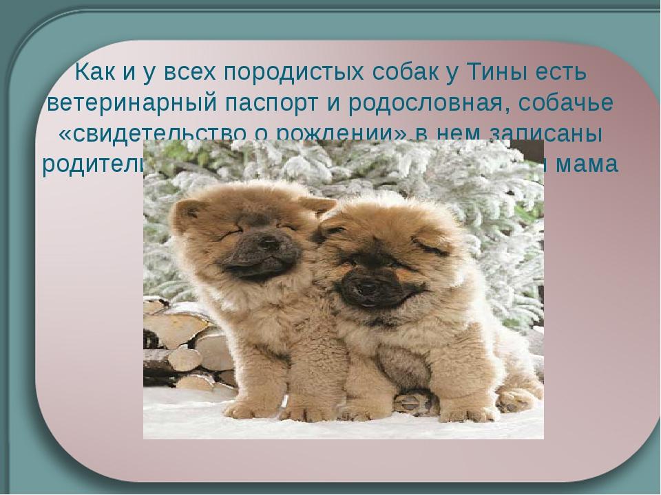 Как и у всех породистых собак у Тины есть ветеринарный паспорт и родословная,...