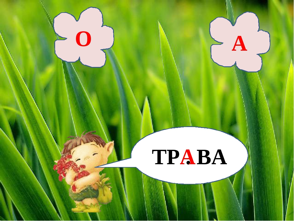 ТР . ВА О А А
