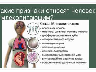 Какие признаки относят человека к млекопитающим?