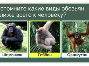 Вспомните какие виды обезьян ближе всего к человеку?