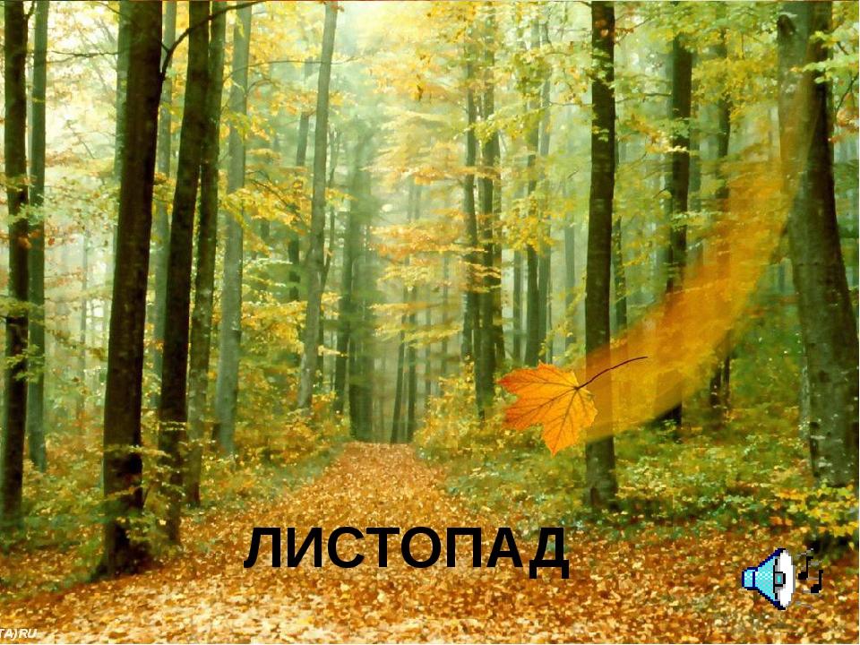 ЛИСТОПАД