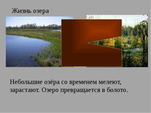Жизнь озера Небольшие озёра со временем мелеют, зарастают. Озеро превращается