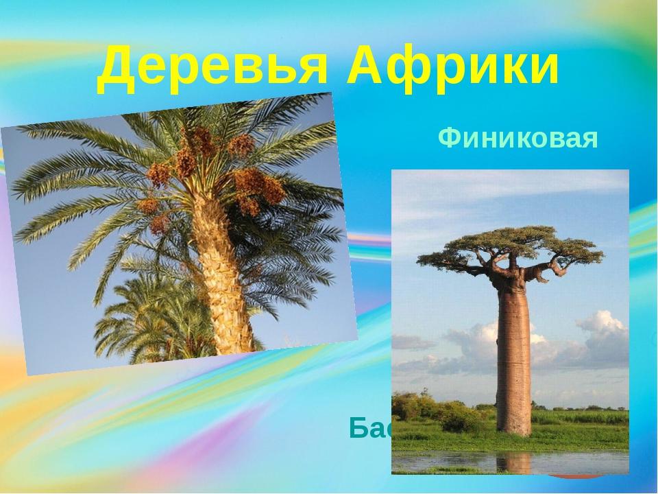 Деревья Африки Финиковая пальма Баобаб