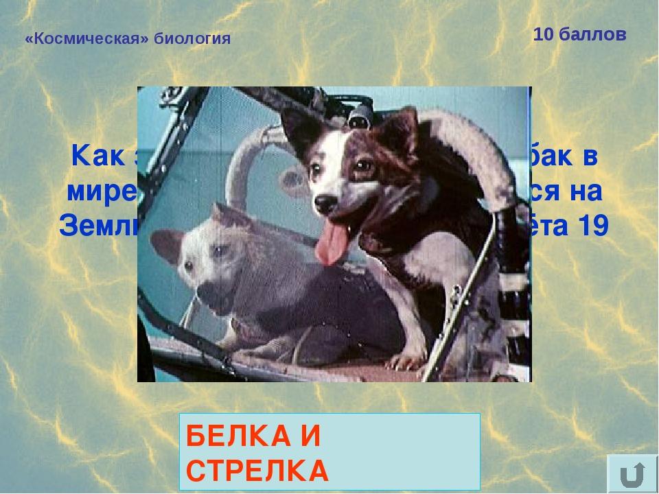 «Космическая» биология 10 баллов Как звали самых известных собак в мире, благ...