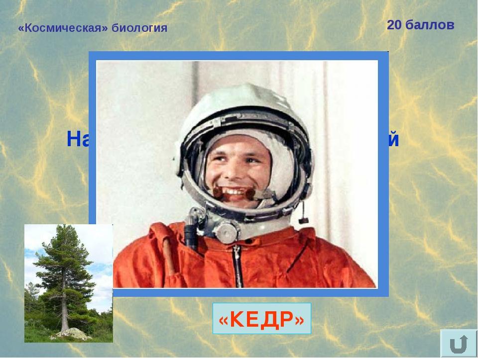 «Космическая» биология 20 баллов Назовите «хвойный» позывной Юрия Гагарина. «...