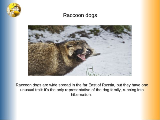 Raccoon dogs Raccoon dogs are wide spread in the far East of Russia, but they...