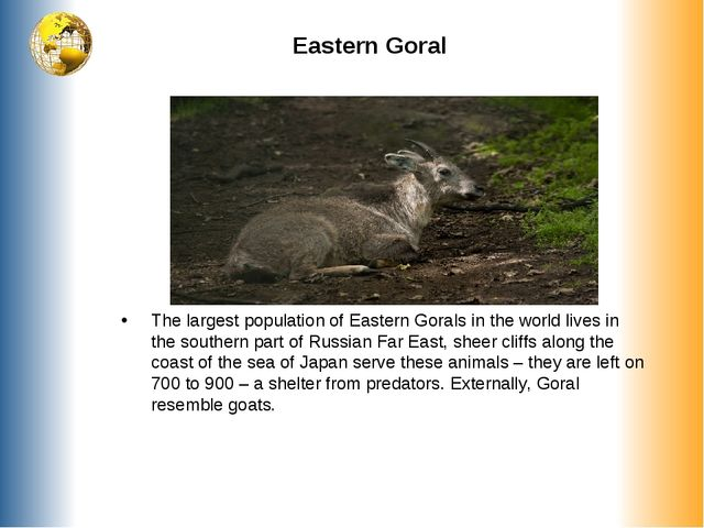 Eastern Goral The largest population of Eastern Gorals in the world lives...
