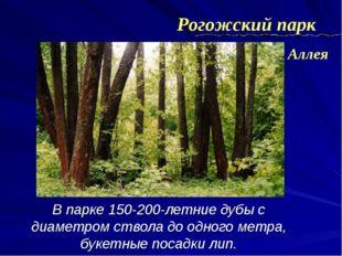 В парке 150-200-летние дубы с диаметром ствола до одного метра, букетные поса