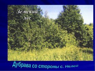 Земский лес