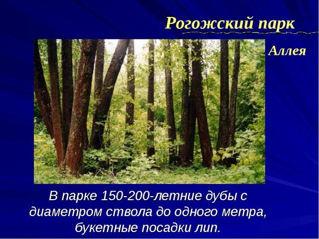 В парке 150-200-летние дубы с диаметром ствола до одного метра, букетные поса...