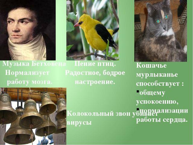 Кошачье мурлыканье способствует : общему успокоению, нормализации работы серд...