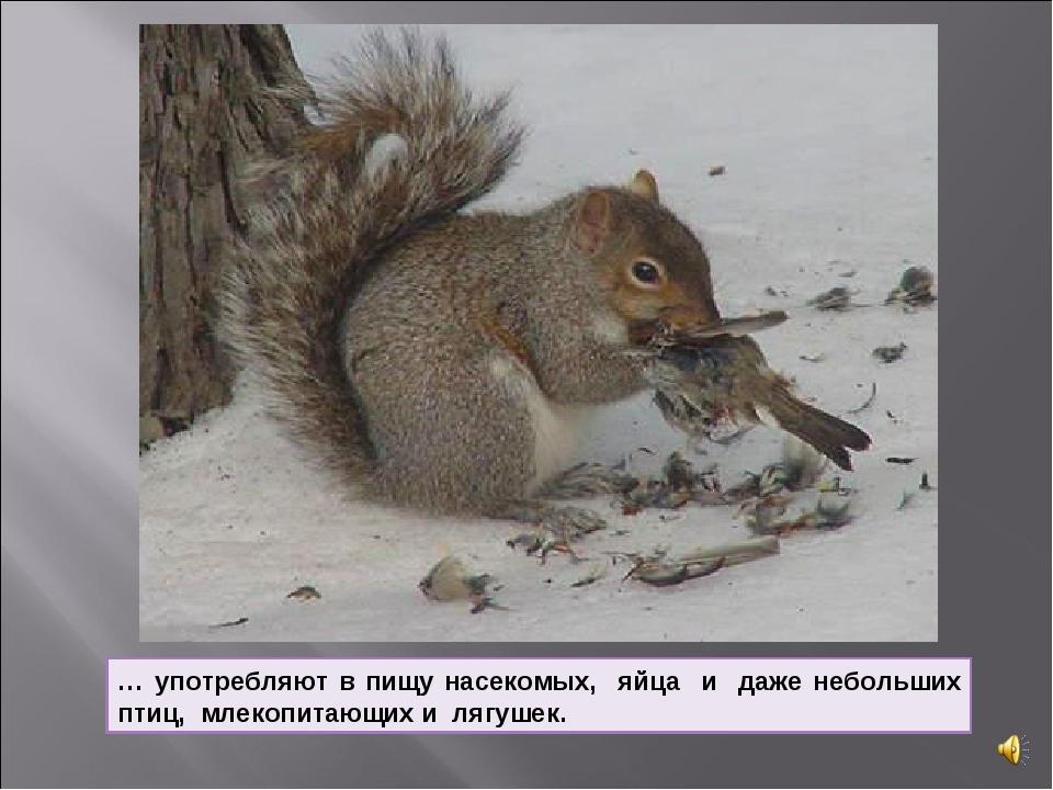 … употребляют в пищу насекомых, яйца и даже небольших птиц, млекопитающих и л...