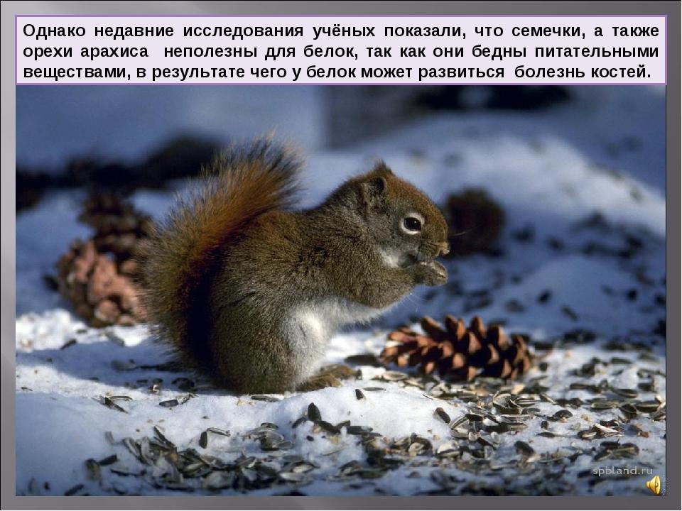 Однако недавние исследования учёных показали, что семечки, а также орехи арах...