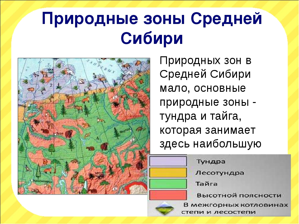 Природные зоны Средней Сибири Природных зон в Средней Сибири мало, основные п...