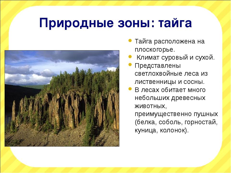 Природные зоны: тайга Тайга расположена на плоскогорье. Климат суровый и сухо...