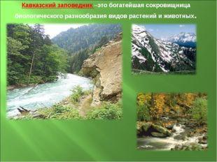 Кавказский заповедник –это богатейшая сокровищница биологического разнообрази