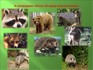 В заповеднике обитает 89 видов млекопитающих.