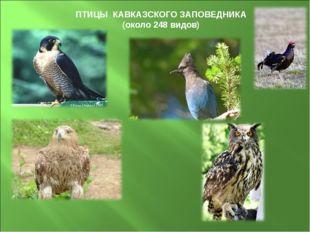 ПТИЦЫ КАВКАЗСКОГО ЗАПОВЕДНИКА (около 248 видов)