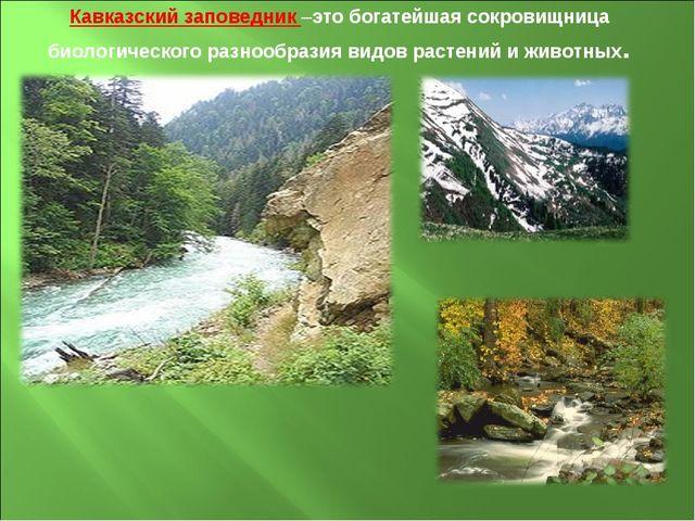 Кавказский заповедник –это богатейшая сокровищница биологического разнообрази...